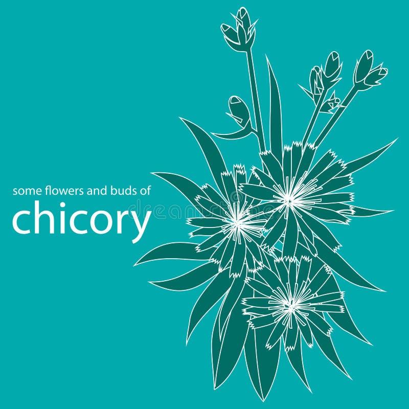 Quelques fleurs et bourgeons de chicorée illustration libre de droits