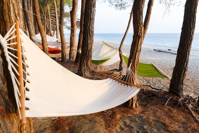 Quelques hamacs sont accrochés entre les pins sur la plage de la Mer Noire pour un repos confortable images libres de droits