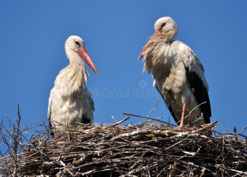 Quelques la cigogne est dans son nid images libres de droits