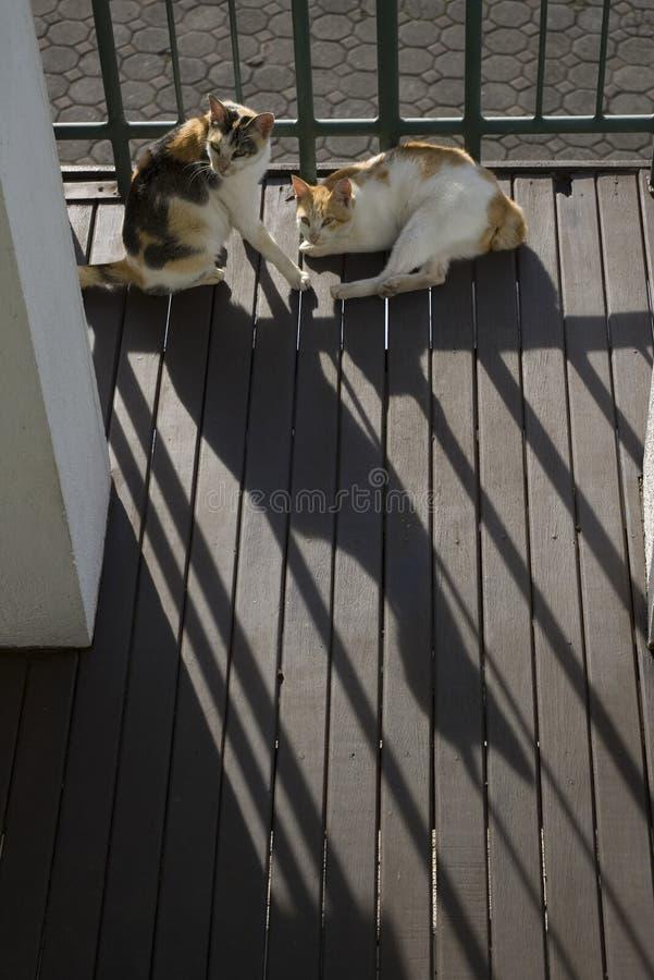Quelques le chat le prend un bain de soleil le matin frais photographie stock