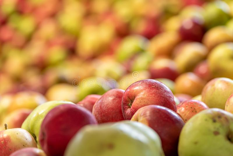 Quelques pommes mûres de chute contre l'automne de saison brouillé rougeoyant de fond images stock
