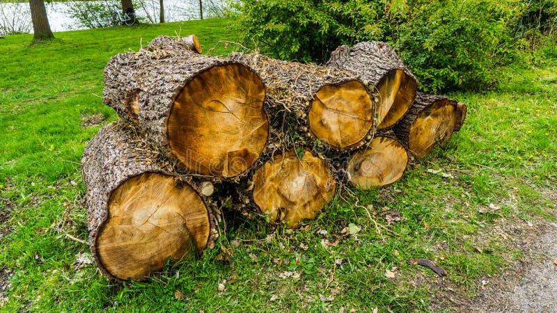 Quelques rondins d'arbre image libre de droits