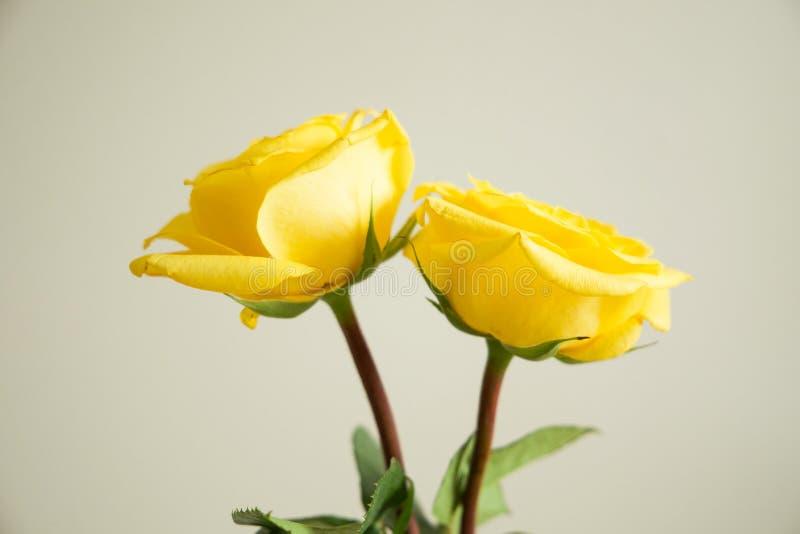 Quelques roses jaunes images stock