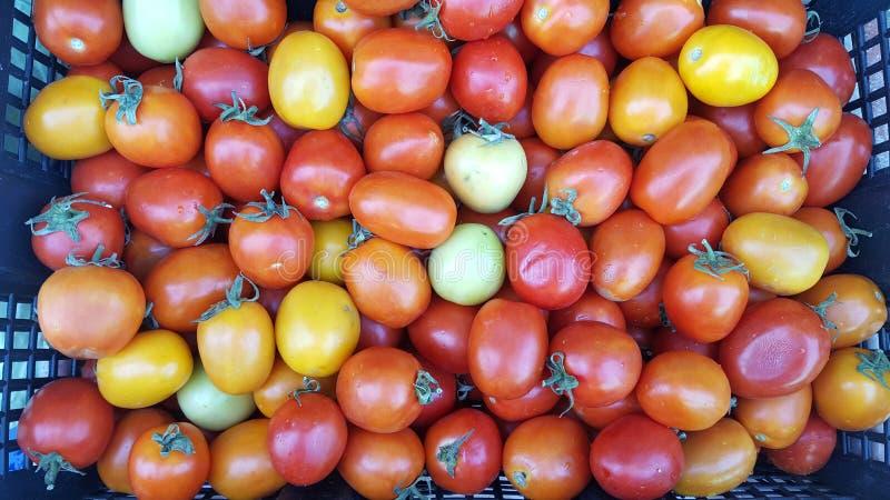 Quelques tomates putréfiées dans le panier image libre de droits