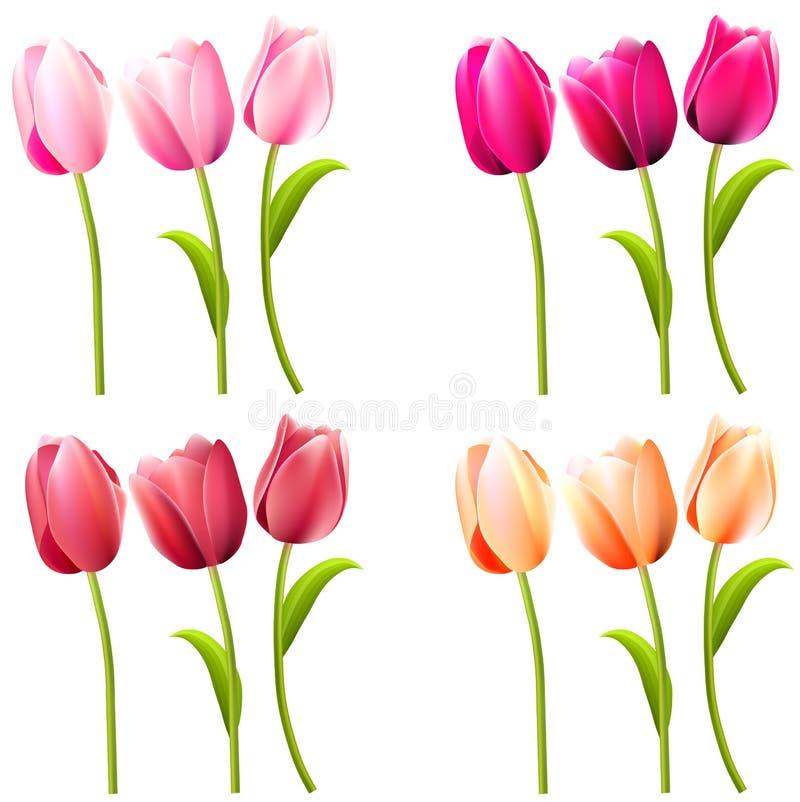 Quelques tulipes réalistes sur le blanc illustration stock