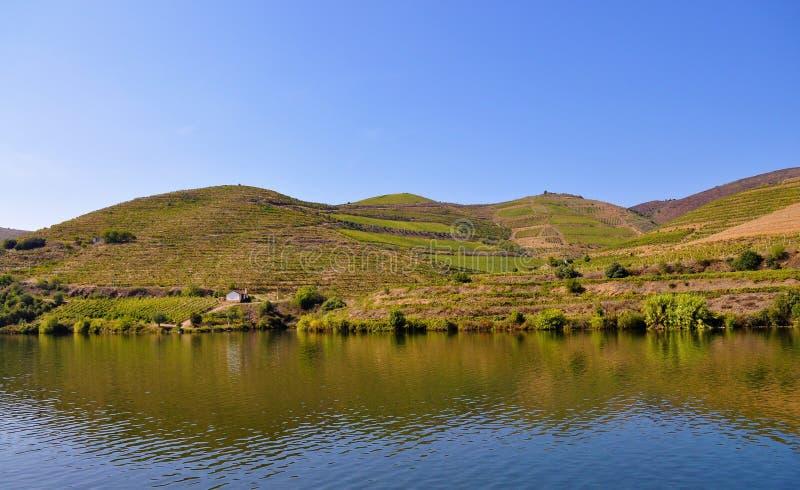 Quelques vignobles à la rivière de Douro images libres de droits