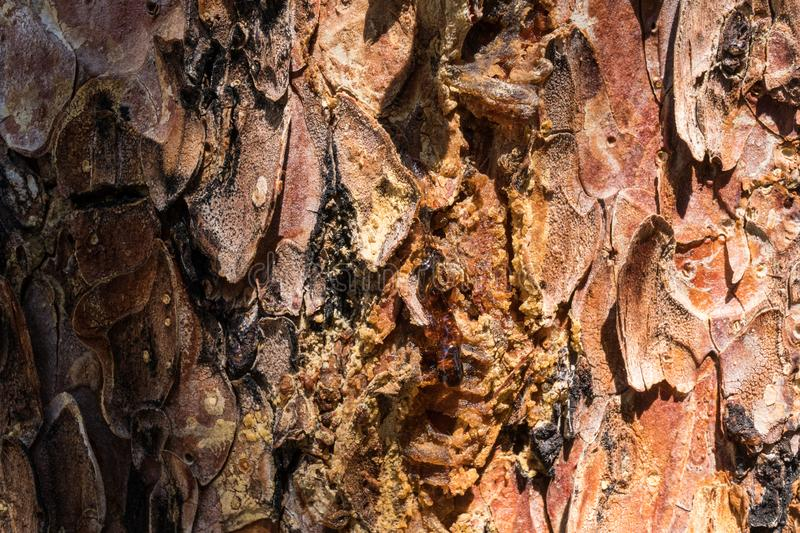 Quemado pine tree macro photo. Details of the pine tree's bark can be seen in this macro photo, catron, mexico, new, usa, abstract, brown, close-up royalty free stock photography