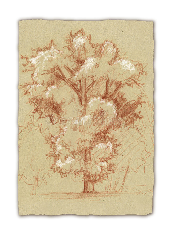 Quercia-albero illustrazione di stock