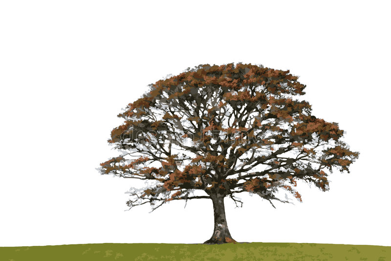 Quercia astratta di autunno illustrazione vettoriale