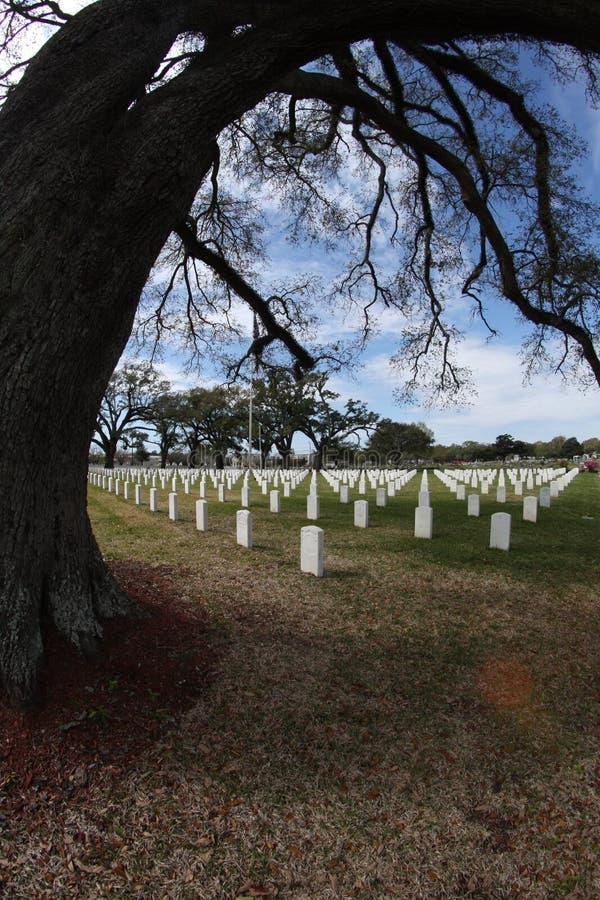 Quercia in cimitero fotografie stock
