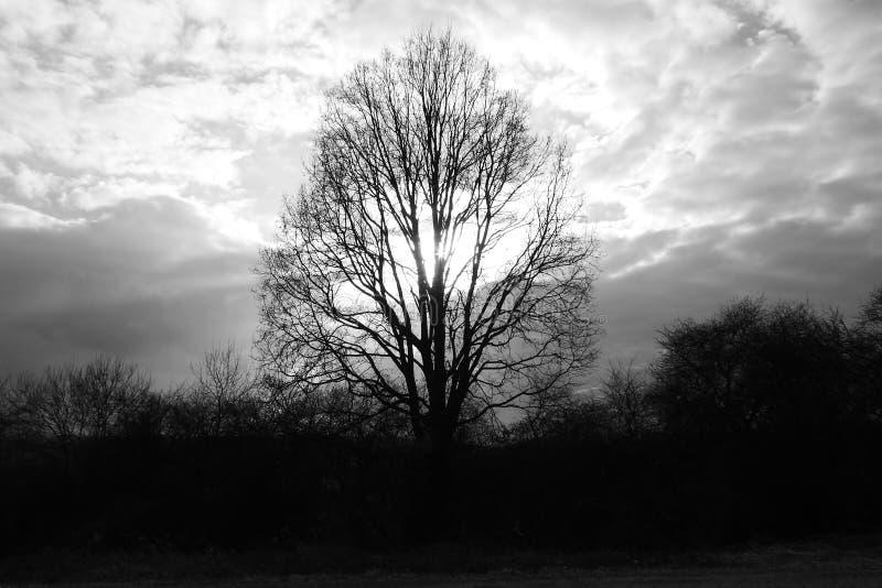 Quercia dal sole sotto le nuvole della primavera 2017 immagini stock libere da diritti