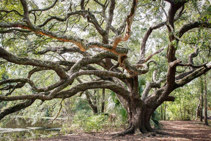 Quercia del parco della città di New Orleans immagini stock