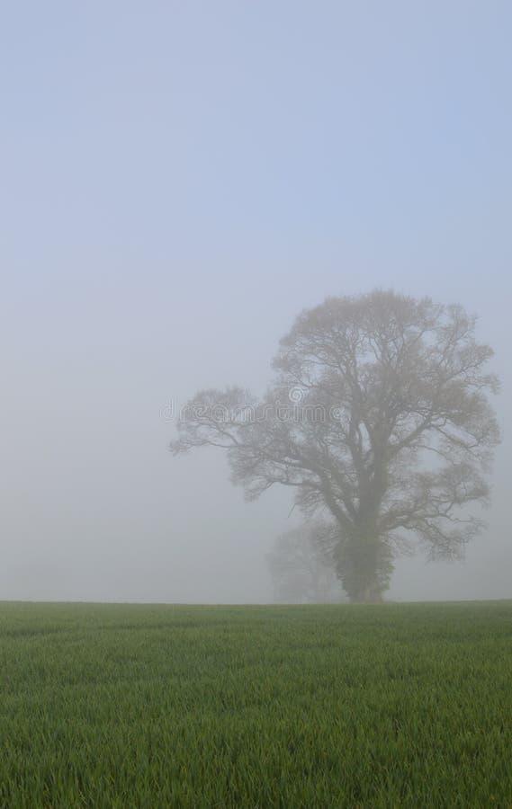 Quercia in un campo inglese del raccolto fotografie stock libere da diritti