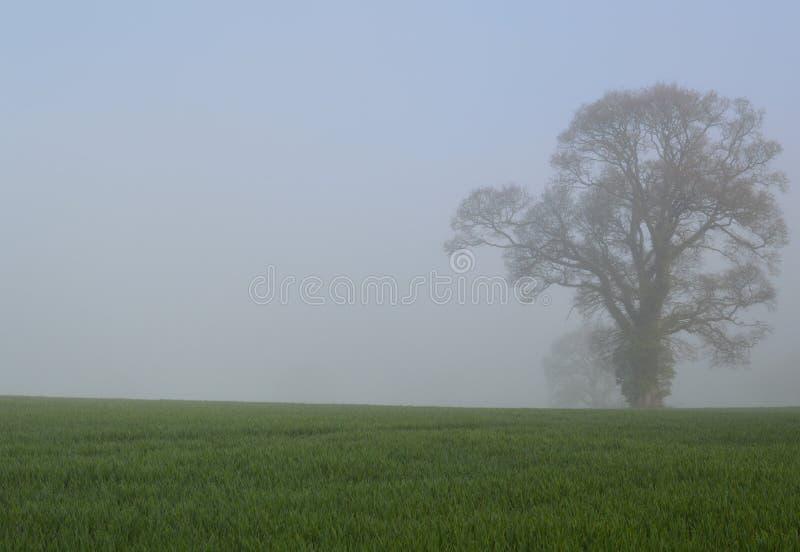 Quercia in un campo inglese del raccolto fotografia stock libera da diritti