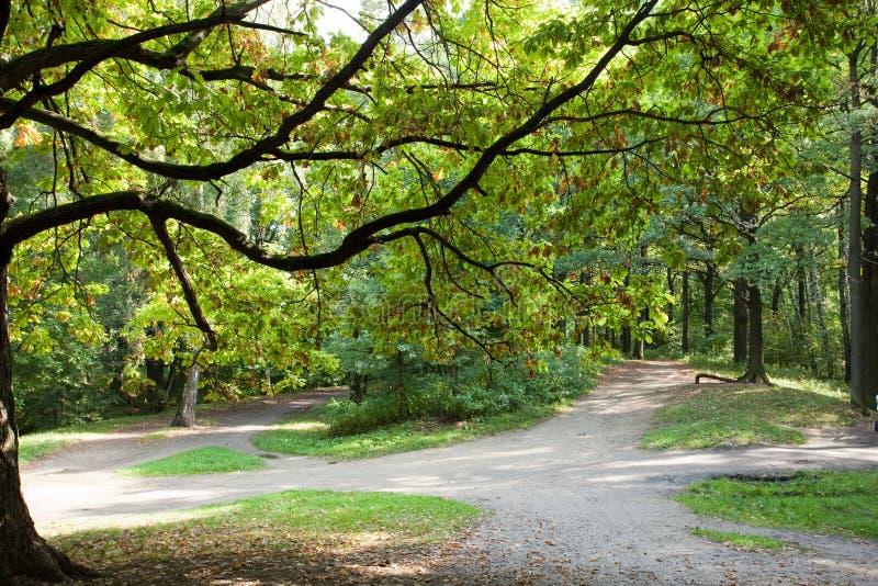 Quercus robur, Eik royalty-vrije stock foto