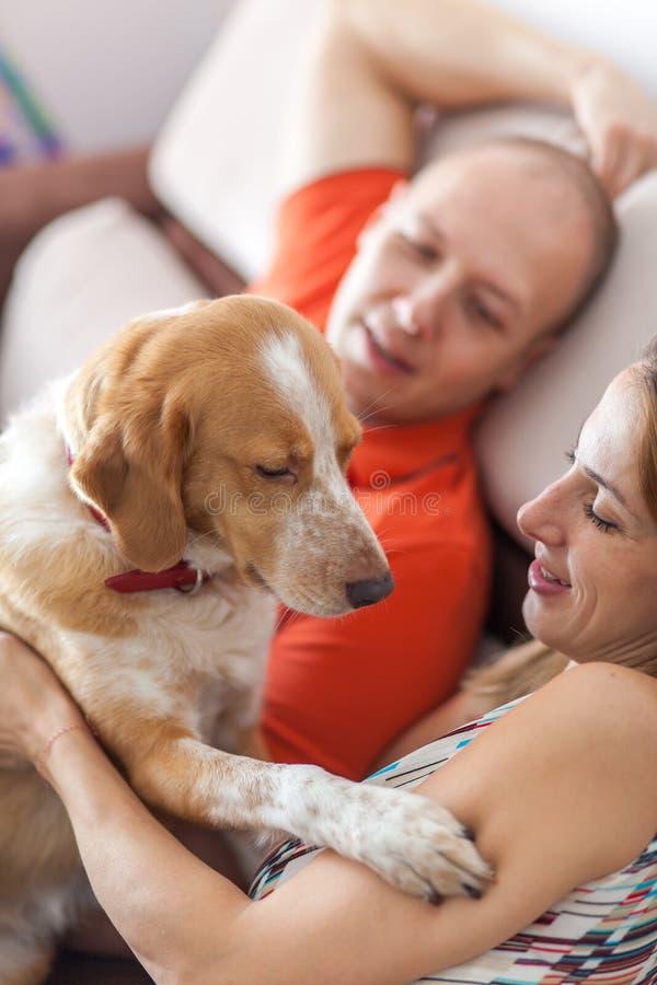 Querer un perro fotos de archivo libres de regalías