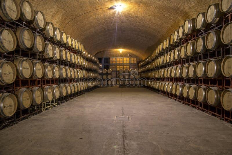queretaro México dos vinhedos oco fotografia de stock royalty free