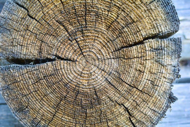 Querschnitt des alten Baumstammes, Jahresringe und Spr?nge zeigend H?lzerne Beschaffenheit lizenzfreie stockfotos