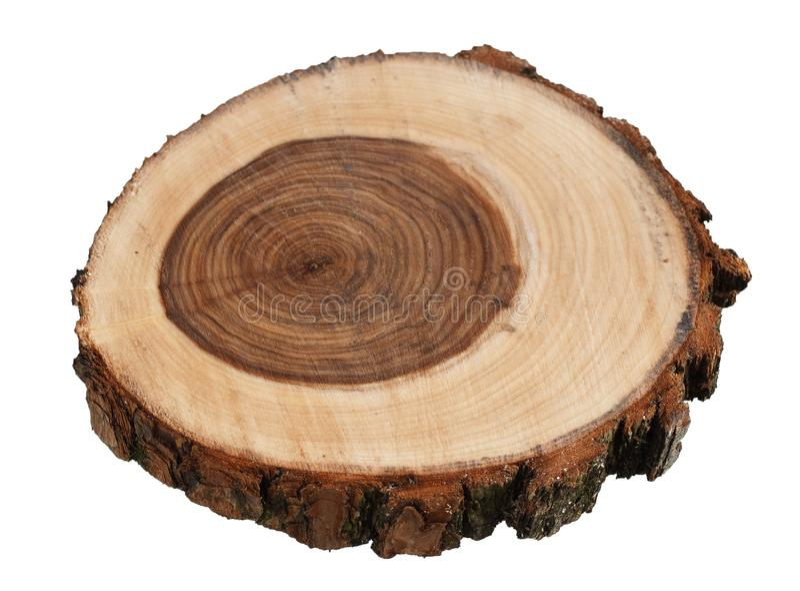 Querschnitt des Trauerweidebaumstammes lokalisiert auf weißem Hintergrund lizenzfreie stockbilder