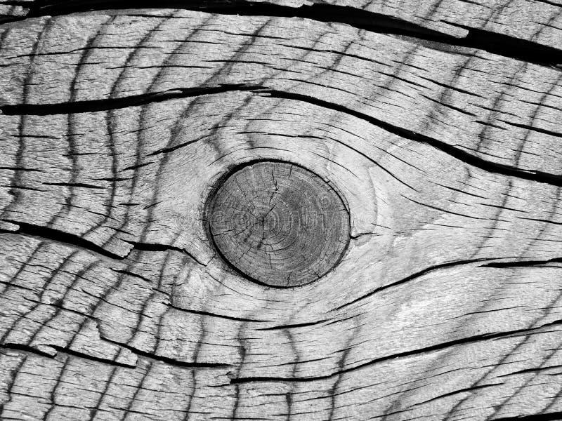 Querschnitt und der Knoten des alten Baums als interessante hölzerne Beschaffenheit - Schwarzweiss stockfotos