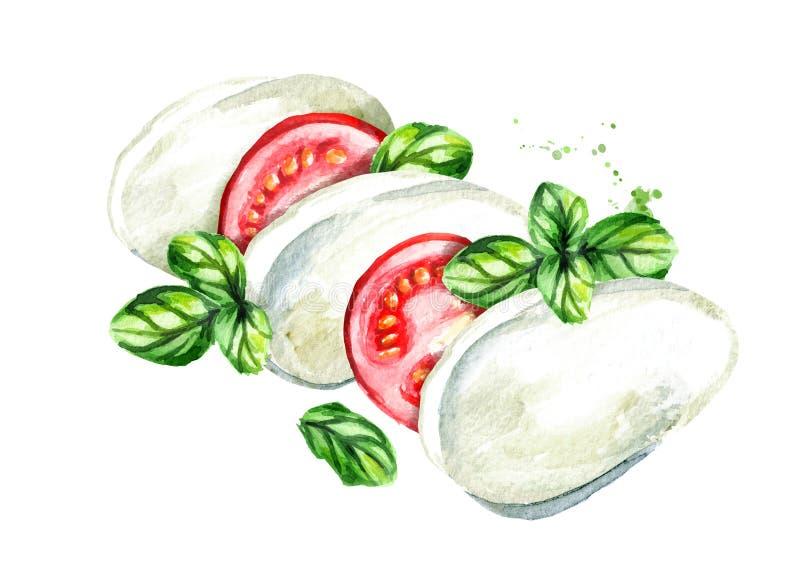 Queso de la mozzarella con los tomates y la albahaca Ejemplo dibujado mano de la acuarela, aislado en el fondo blanco libre illustration