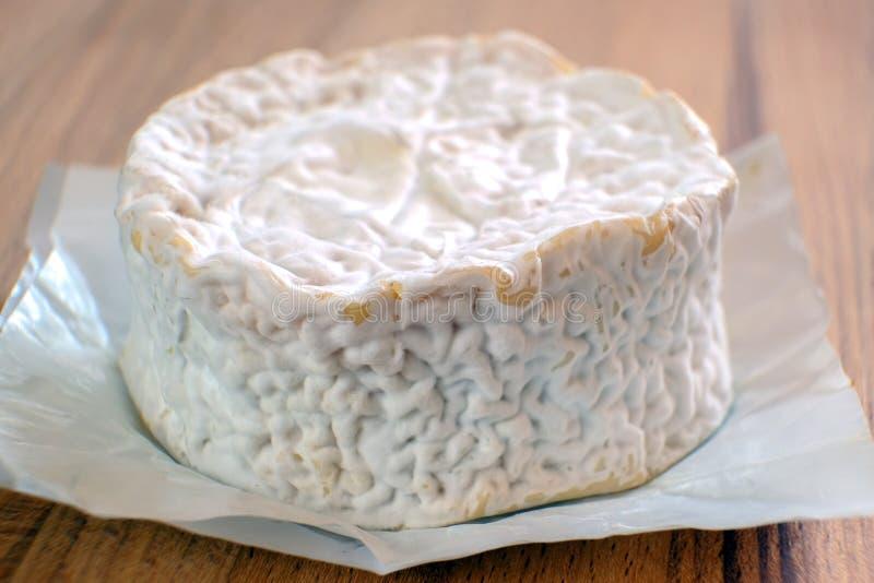Queso del camembert con el molde El queso es bueno para la salud y la digesti?n El concepto de consumici?n sana imágenes de archivo libres de regalías