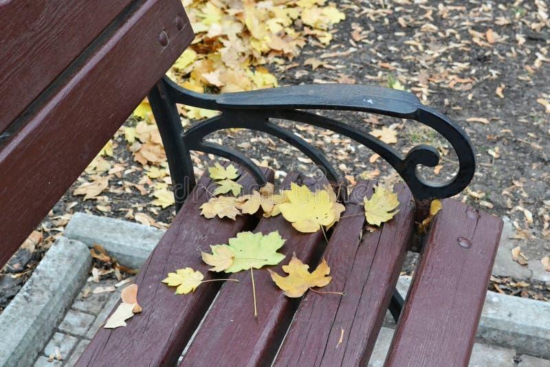 Queste sono foglie di acero differente di taglia su un banco marrone immagine stock
