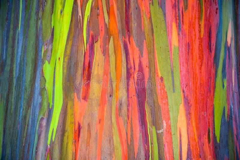 Corteccia di albero orizzontale dell'eucalyptus dell'arcobaleno fotografie stock