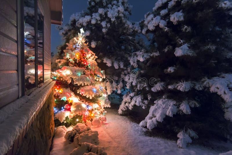 Questo albero di Natale innevato sta brillantemente fuori contro i toni blu scuro della luce di sera tardi in questo sce di vacan fotografia stock