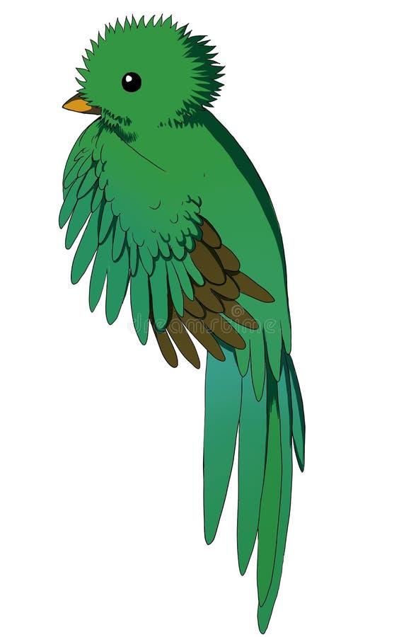 Quetzal стоковая фотография