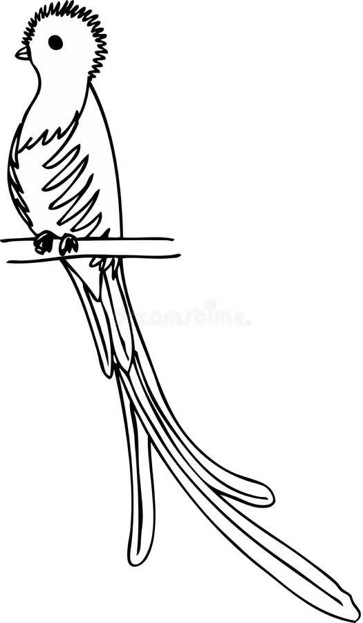 Quetzal Stock Vector Illustration Of Drawn Illustration