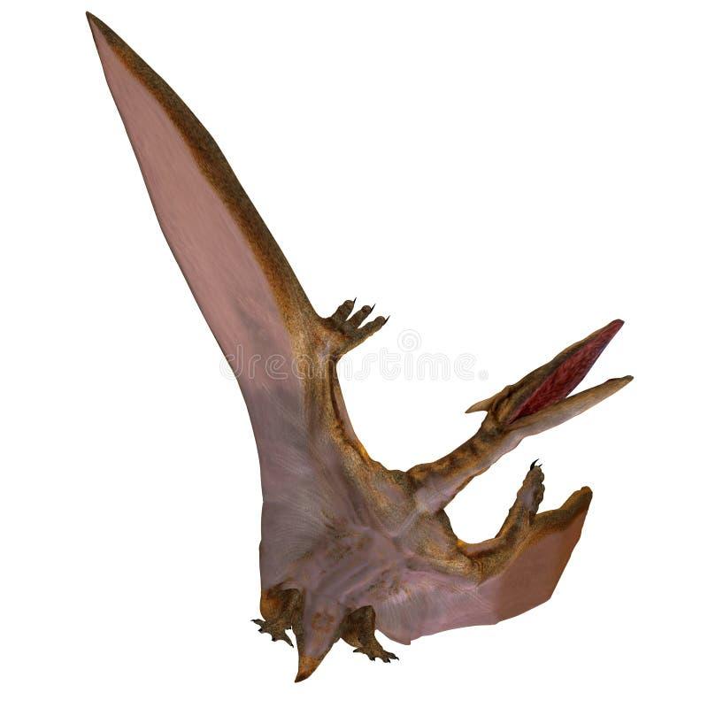 Quetzalcoatlus lizenzfreie abbildung