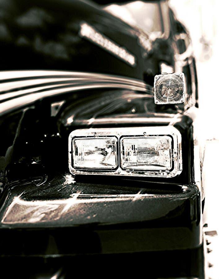 Queue écourtée noire et blanche photo libre de droits