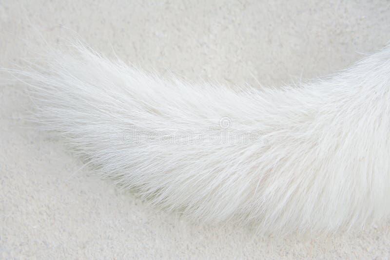 Queue blanche de chien sur le fond images libres de droits
