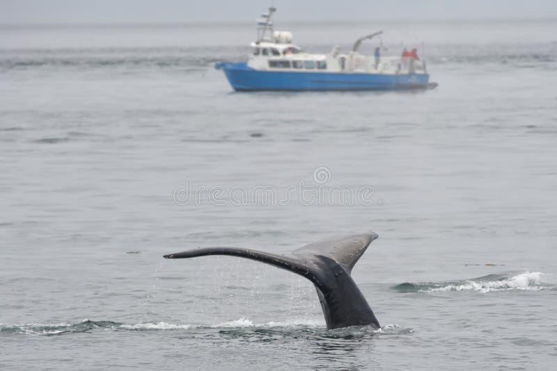 Queue de baleine de bosse tout en descendant l'Alaska images stock
