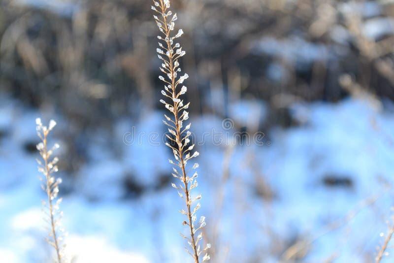 Queue de fée d'hiver photo libre de droits