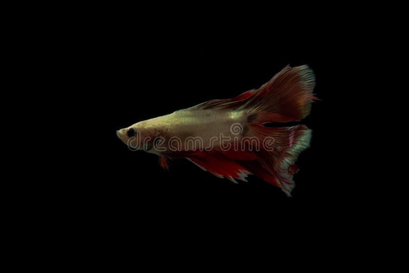 Queue de poissons sur l'obscurité photos stock