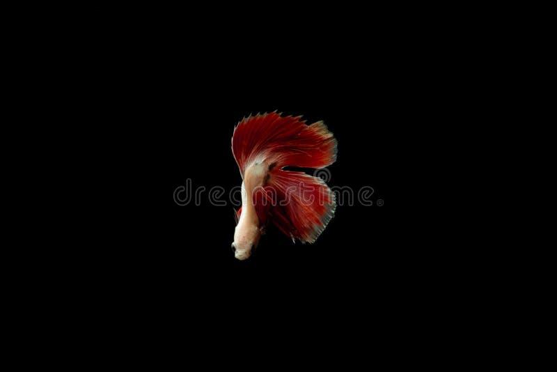 Queue de poissons sur l'obscurité images stock