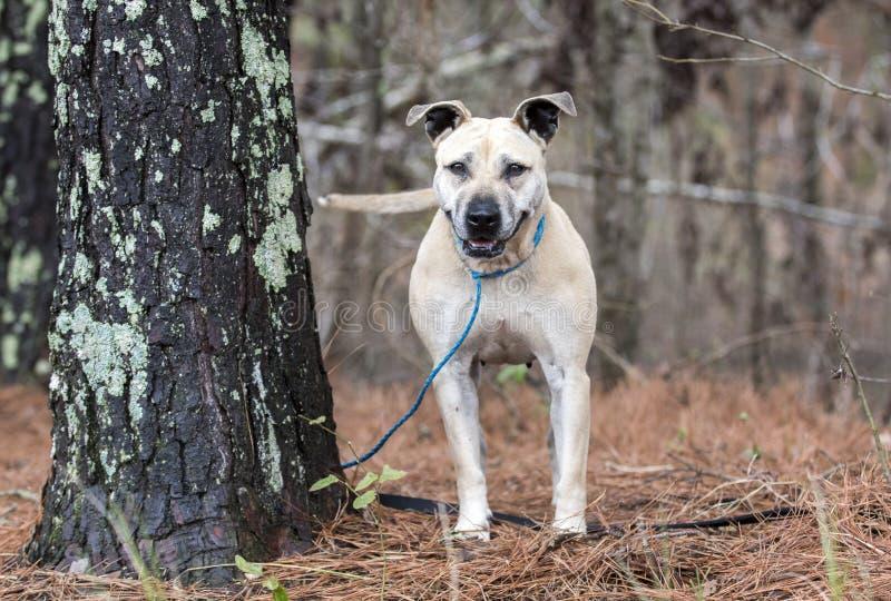 Queue de remuement de sourire heureuse de chien bronzage image libre de droits
