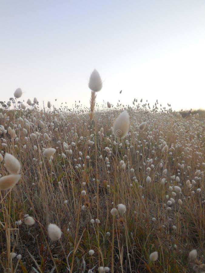 Queues de lapin au lever de soleil photographie stock libre de droits