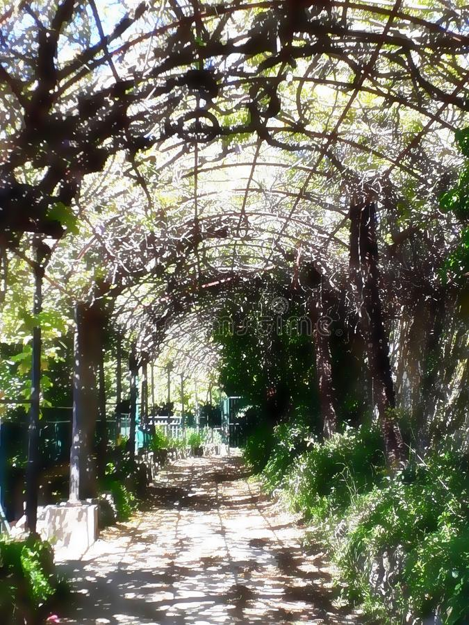 Quezzis trädgård, lite skatt arkivfoton