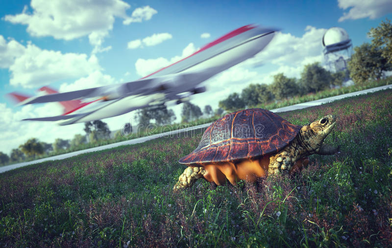 Quién es más rápido Aeroplano y tortuga corriente concepto del recorrido fotografía de archivo