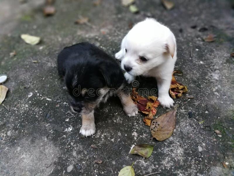 Quiérame amor mi perro fotografía de archivo libre de regalías