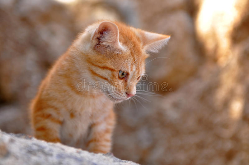 Quick-witted kitten royalty free stock photos