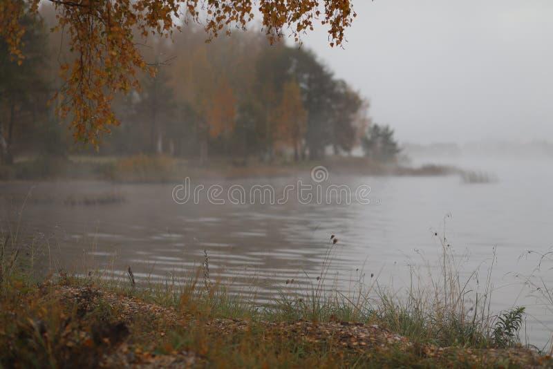 аutumn misty morning ,heavy fog,the trees beautiful view stock photos