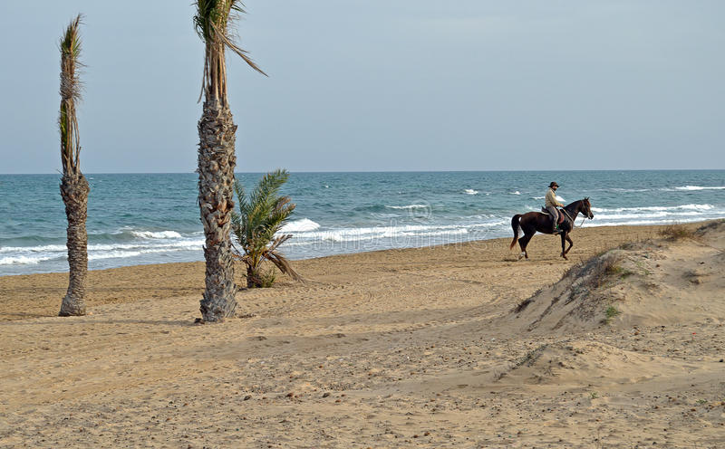 Horse Riding Along A Beach stock photography