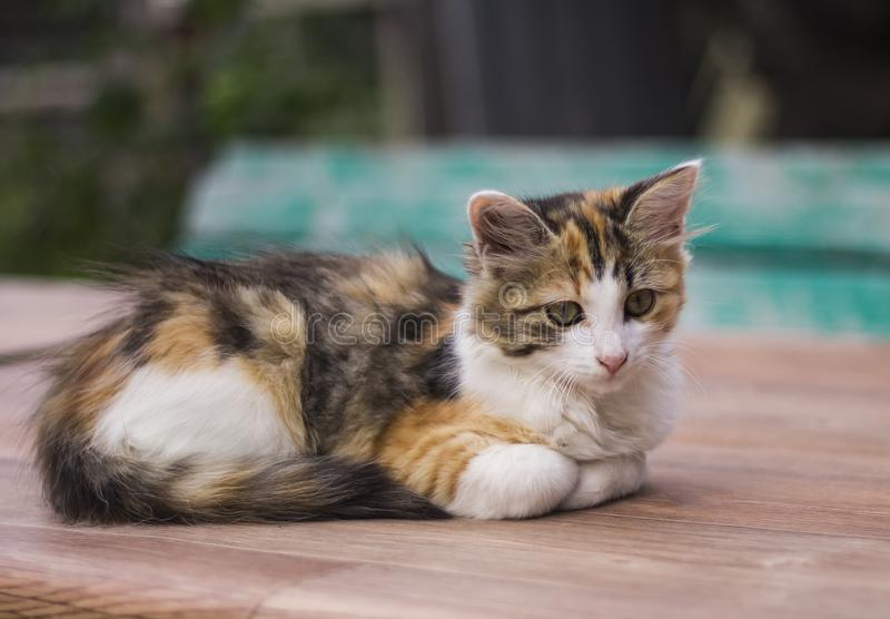 Quiet beautiful kitten lying and resting in nature stock images