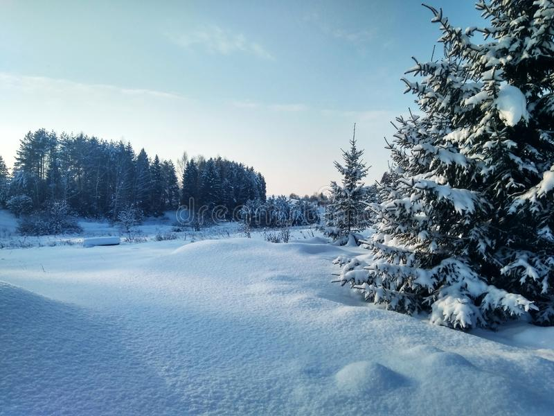 Quiet Christmas morning. Beautiful landscape. Quiet Christmas morning. Beautiful winter landscape with untouched snow and fir trees royalty free stock photography