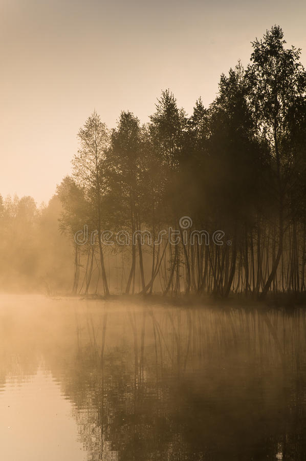 Quiet lake morning fog stock photography