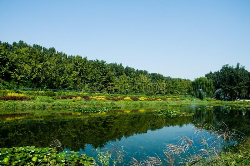 Quiet lake under blue sky stock image
